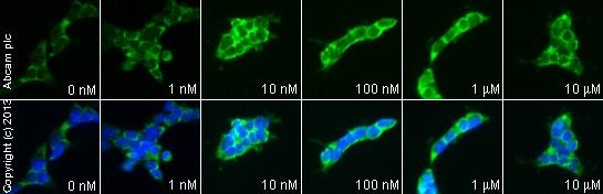 Functional Studies - Neuropeptide S (rat), NPS receptor agonist (ab120246)