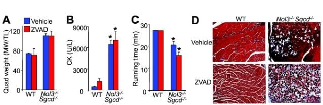 Functional Studies - Z-VAD(OH)-FMK, Irreversible general caspase inhibitor (ab120382)