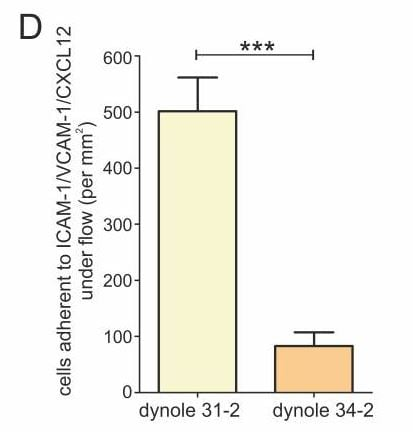 Functional Studies - Dynole<sup>&reg;</sup> 31-2, Negative control for Dynole<sup>reg</sup> 34-2 (ab120464)