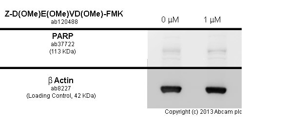 Functional Studies - Z-D(OMe)E(OMe)VD(OMe)-FMK, Cell permeable caspase-3 inhibitor (ab120488)