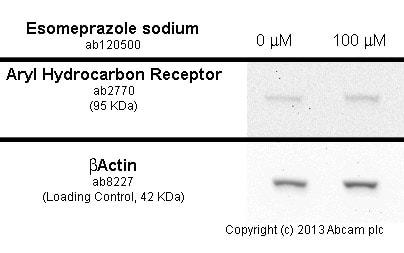 Functional Studies - Esomeprazole sodium, H<sup>+</sup>/ K<sup>+</sup>-ATPase (proton pump) inhibitor (ab120500)