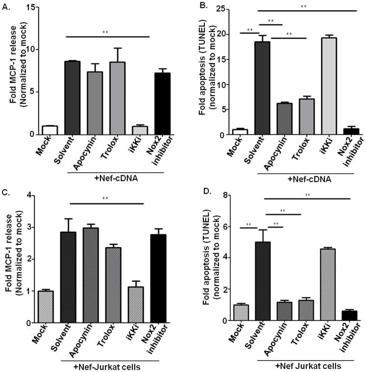 Functional Studies - Apocynin, NADPH-oxidase inhibitor (ab120615)