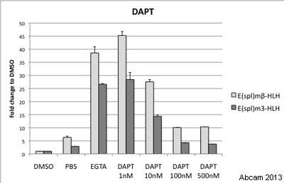 Functional Studies - DAPT, gamma-Secretase inhibitor (ab120633)