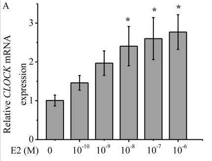 Functional Studies - 17beta-Estradiol, Selective agonist of ER receptor (ab120657)