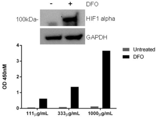 Deferoxamine mesylate, Iron chelator (ab120727)