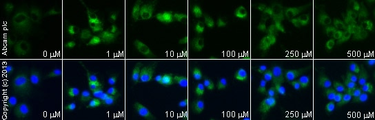 Functional Studies - Zaprinast, cGMP phosphodiesterase inhibitor (ab120940)