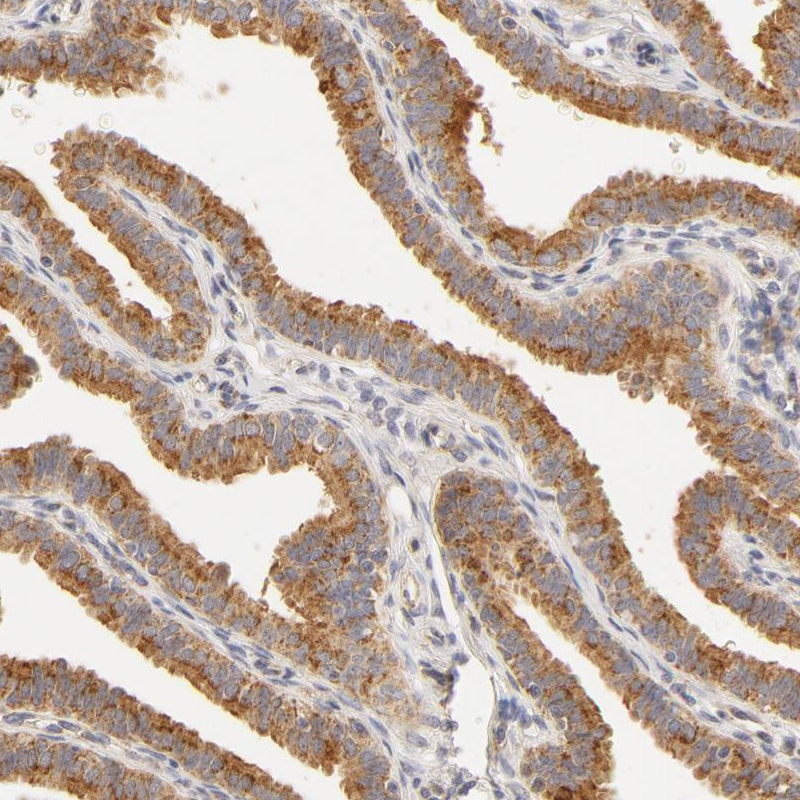 Immunohistochemistry (Formalin/PFA-fixed paraffin-embedded sections) - Anti-RPGR antibody (ab121143)