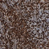 Immunohistochemistry (Formalin/PFA-fixed paraffin-embedded sections) - Anti-SAGE1 antibody (ab121160)