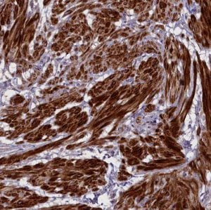 Immunohistochemistry (Formalin/PFA-fixed paraffin-embedded sections) - Anti-Adropin antibody (ab122800)