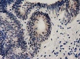 Immunohistochemistry (Formalin/PFA-fixed paraffin-embedded sections) - Anti-Ephrin A2 antibody [OTI3E3] (ab123877)