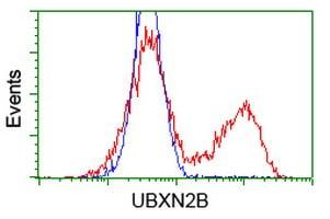 Flow Cytometry - Anti-UBXN2B antibody [OTI3H8] (ab124032)