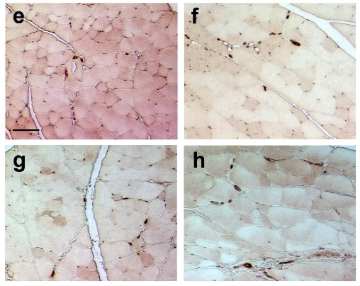 Immunohistochemistry (Formalin/PFA-fixed paraffin-embedded sections) - Anti-CD31 antibody (ab124432)