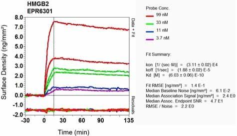 Other - Anti-HMGB2 antibody [EPR6301] (ab124670)