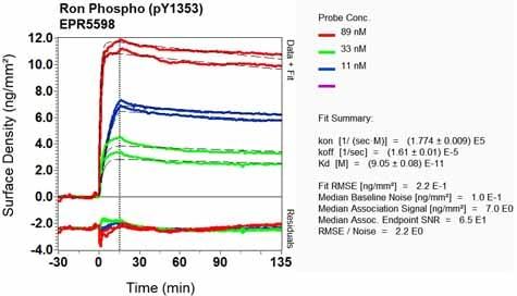 Other - Anti-RON (phospho Y1353) antibody [EPR5598] (ab124671)