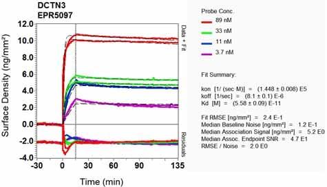 Other - Anti-DCTN3 antibody [EPR5097] (ab124674)