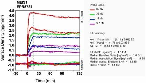 Other - Anti-MEIS1 antibody [EPR5781] (ab124686)