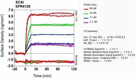 OI-RD Scanning - Anti-SCAI antibody [EPR4128] (ab124688)