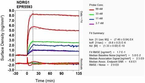 OI-RD Scanning - Anti-NDRG1 antibody [EPR5593] (ab124689)