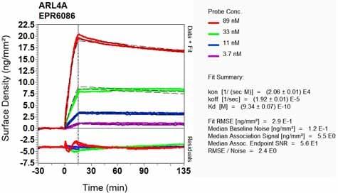 Other - Anti-ARL4 antibody [EPR6086] (ab124690)