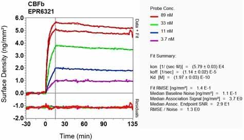 Other - Anti-CBFb antibody [EPR6321] (ab124693)