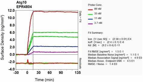 OI-RD Scanning - Anti-ATG10 antibody [EPR4804] (ab124711)