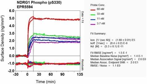 Other - Anti-NDRG1 (phospho S330) antibody [EPR5594] (ab124713)