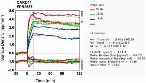 OI-RD Scanning - Anti-Carma 1/CARD11 antibody [EPR2557] (ab124730)