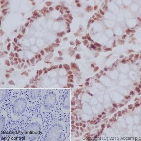 Immunohistochemistry (Formalin/PFA-fixed paraffin-embedded sections) - Anti-IRF2 antibody [EPR4644(2)] (ab124744)