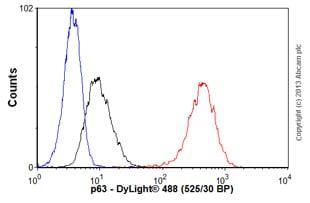 Flow Cytometry - Anti-p63 antibody [EPR5701] (ab124762)