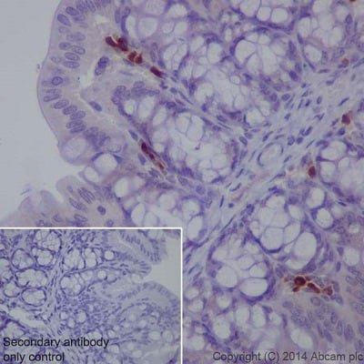 Immunohistochemistry (Formalin/PFA-fixed paraffin-embedded sections) - Anti-MDC antibody [EPR1362] (ab124768)