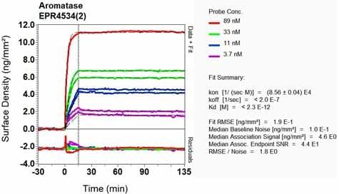 Other - Anti-Aromatase antibody [EPR4534(2)] (ab124776)