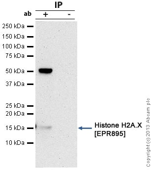 Immunoprecipitation - Anti-Histone H2A.X antibody [EPR895] - ChIP Grade (ab124781)