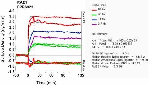 Other - Anti-RAE1 antibody [EPR6923] (ab124783)