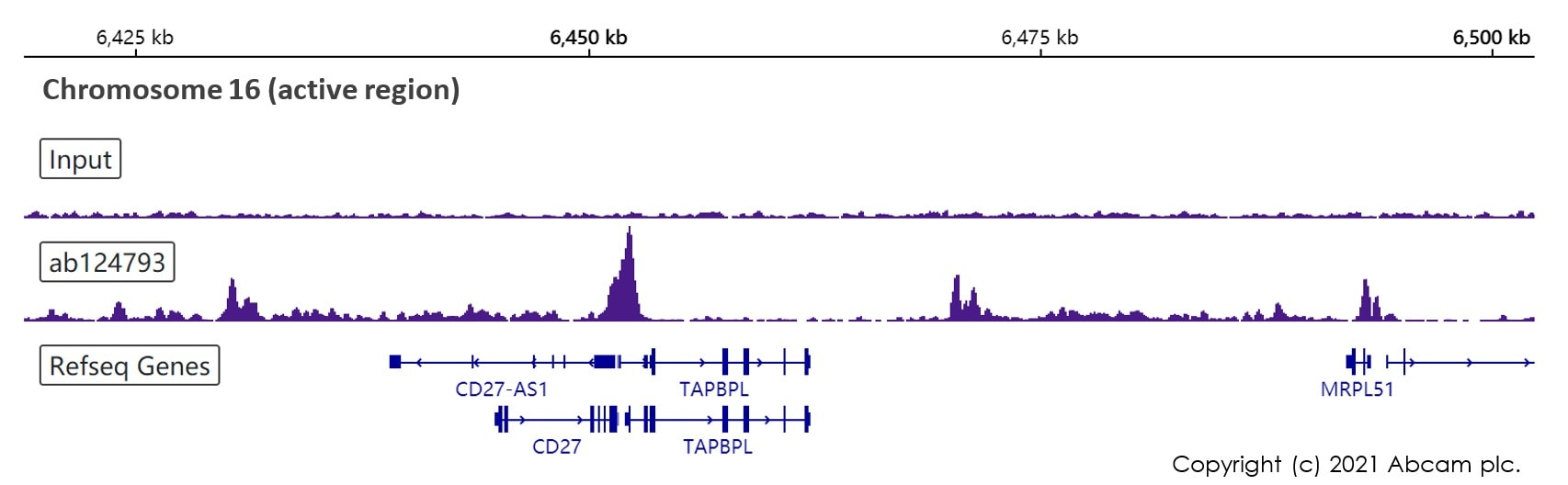 ChIP-sequencing - Anti-Histone H2A.Z antibody [EPR6172] (ab124793)