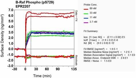 OI-RD Scanning - Anti-BRAF (phospho S729) antibody [EPR2207] (ab124794)