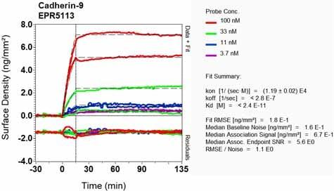 OI-RD Scanning - Anti-Cadherin 9 antibody [EPR5113] (ab124803)