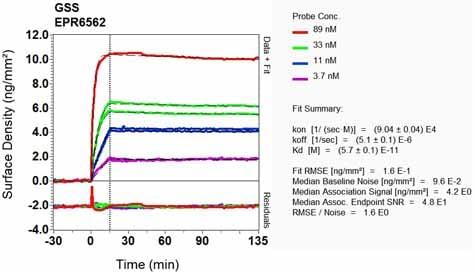 Other - Anti-Glutathione Synthetase antibody [EPR6562] (ab124811)