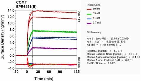 Other - Anti-COMT antibody [EPR6491(B)] (ab124813)