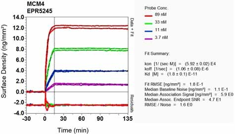 Other - Anti-MCM4 antibody [EPR5245] (ab124836)
