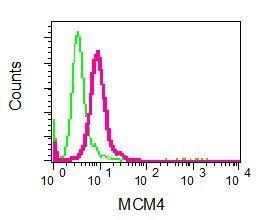 Flow Cytometry - Anti-MCM4 antibody [EPR5245] (ab124836)