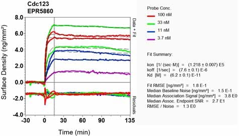 Other - Anti-CDC123 antibody [EPR5860] (ab124878)