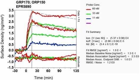 Other - Anti-ORP150 antibody [EPR5890] (ab124884)