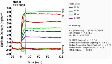 Other - Anti-NDEL1 antibody [EPR5068] (ab124895)