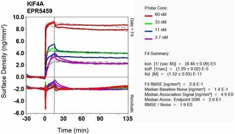 Other - Anti-KIF4A/KIF4 antibody [EPR5459] (ab124903)
