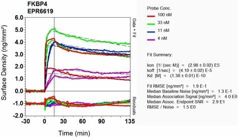 OI-RD Scanning - Anti-FKBP52 antibody [EPR6619] (ab124906)