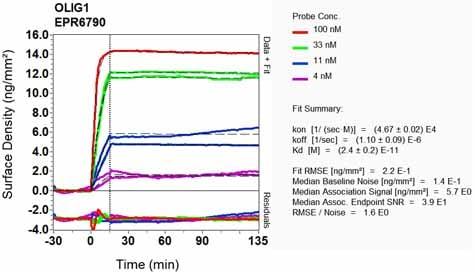Other - Anti-Olig1 antibody [EPR6790] (ab124908)