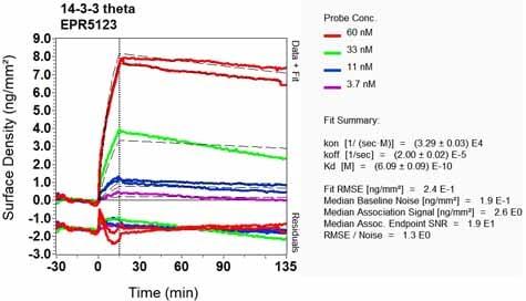 OI-RD Scanning - Anti-14-3-3 Theta + Tau antibody [EPR5123] (ab124909)