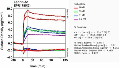 Other - Anti-Ephrin A1 antibody [EPR1785(2)] (ab124911)