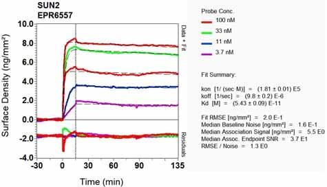 OI-RD Scanning - Anti-SUN2 antibody [EPR6557] (ab124916)