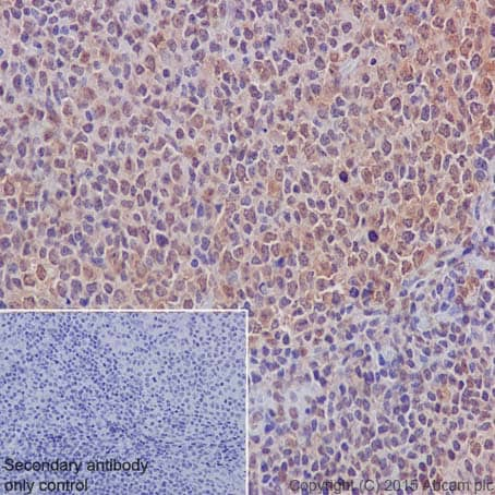 Immunohistochemistry (Formalin/PFA-fixed paraffin-embedded sections) - Anti-Mib1/Mindbomb antibody [EPR2762(2)] (ab124929)